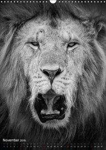 FineArt in Black and White: Der König der Löwen (Wandkalender 20