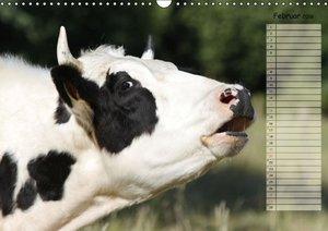 Glückliche Kühe (Wandkalender 2016 DIN A3 quer)