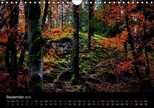 So manyTrees (Wall Calendar 2015 DIN A4 Landscape)