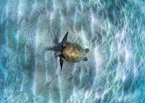 In der Schwebe - Meeresschildkröten (Posterbuch DIN A3 quer)