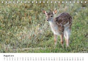 Wildlife Impressionen (Tischkalender 2016 DIN A5 quer)