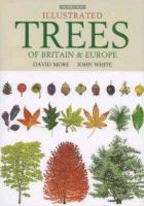 Illustrated Trees