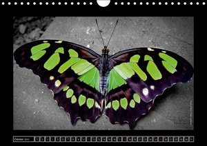 Butterflies 2015 Jewels of Nature (Wall Calendar 2015 DIN A4 Lan