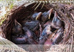 Im Vogelnest. Winzige Schreihälse