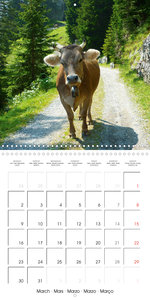 Relaxed Cows (Wall Calendar 2020 300 × 300 mm Square)