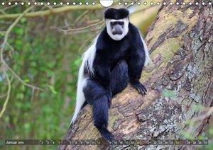 Entspanntes Affenleben