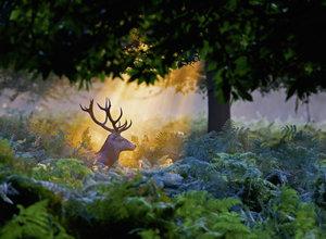 Magischer Lichteinfall, Nature Edition