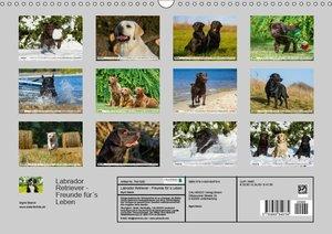 Labrador Retriever - Freunde für\'s Leben (Wandkalender 2019 DIN