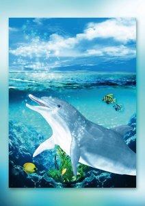 Delfine (Posterbuch DIN A4 hoch)