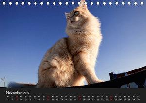 Katzen Blues (Tischkalender 2019 DIN A5 quer)