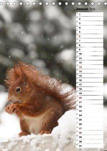 Eichhörnchen - kleine Tiere, große Liebe