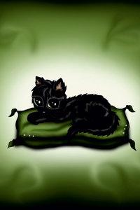 Premium Textil-Leinwand 60 cm x 90 cm hoch Schwarzes Kätzchen