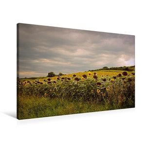 Premium Textil-Leinwand 90 cm x 60 cm quer Sonnenblumenfelder