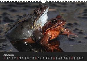 Froschparadies Franken (Wandkalender 2019 DIN A4 quer)
