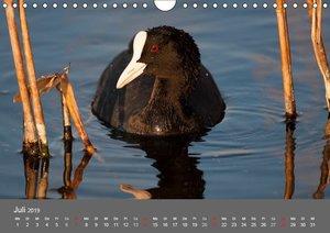 Der Federsee - Vogelparadies in Oberschwaben (Wandkalender 2019
