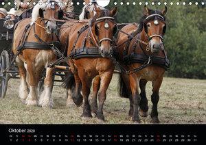 Starke Pferde bei der Arbeit