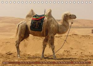 Kamele . Dromedar & Trampeltier (Tischkalender 2019 DIN A5 quer)