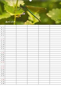 Libellen / Familienplaner (Wandkalender 2019 DIN A2 hoch)