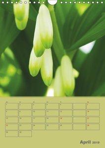 Naturbilder (Wandkalender 2019 DIN A4 hoch)