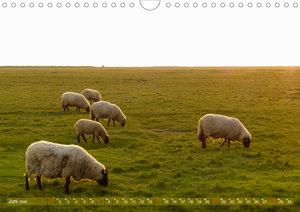 Schafe auf Deich und Düne (Wandkalender 2020 DIN A4 quer)