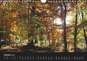 Baum Art (Wandkalender 2019 DIN A4 quer)
