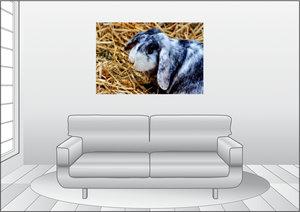 Premium Textil-Leinwand 120 cm x 80 cm quer Widder Zwergkaninche
