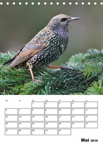 Vögel im heimischen Garten (Tischkalender 2019 DIN A5 hoch)