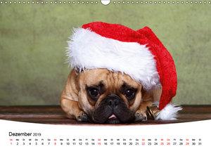 Bullys - Französische Bulldoggen 2019 (Wandkalender 2019 DIN A3