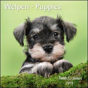 Welpen Puppies 2019 Trends & Classics Kalender