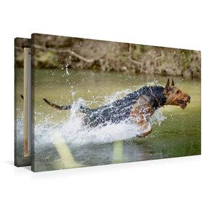 Premium Textil-Leinwand 90 cm x 60 cm quer Airedale-Terrier