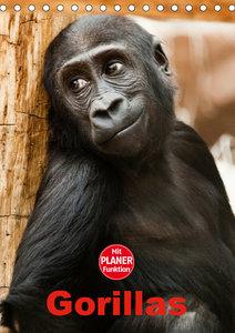 Gorillas (Tischkalender 2019 DIN A5 hoch)