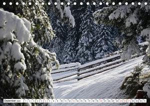 Bäume in Italien (Tischkalender 2020 DIN A5 quer)