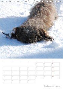 Der Dackel - mein kleiner Freund (Wandkalender 2019 DIN A4 hoch)