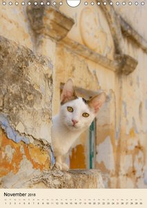 Katzen von Rhodos