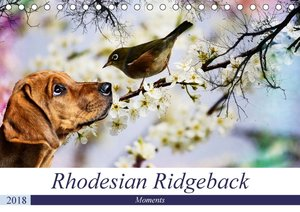 Rhodesian Ridgeback - Moments