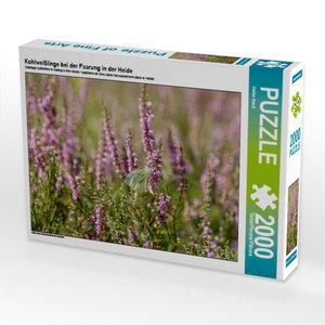 Kohlweißlinge bei der Paarung in der Heide 2000 Teile Puzzle que