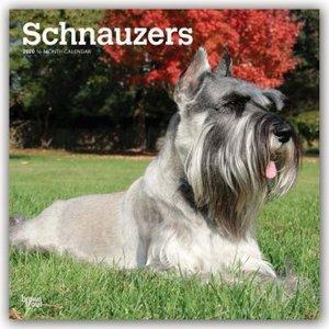 Schnauzers - Schnauzer 2020 - 18-Monatskalender mit freier DogDa