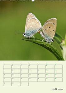 Schmetterlinge - fliegende Schönheiten (Wandkalender 2019 DIN A2