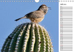 Flora und Fauna der Sonora Wüste (Wandkalender 2019 DIN A4 quer)
