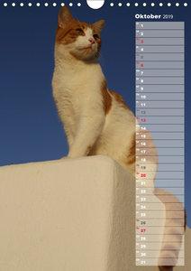 Hauskatzen (Wandkalender 2019 DIN A4 hoch)