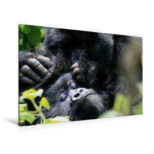 Premium Textil-Leinwand 120 cm x 80 cm quer Berggorillas - Körpe