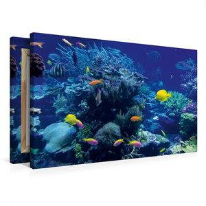 Premium Textil-Leinwand 75 cm x 50 cm quer Korallenriff