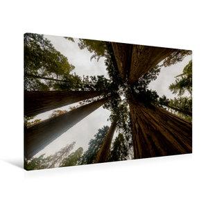 Premium Textil-Leinwand 90 cm x 60 cm quer Sequoia Nationalpark,