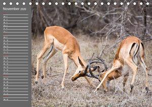 Wildtiere Südafrikas / GeburtstagskalenderCH-Version