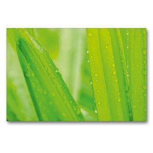 Premium Textil-Leinwand 90 cm x 60 cm quer Palmen im Regen