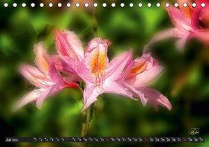 Rhododendren in der Parklandschaft Ammerland (Tischkalender 2019