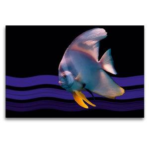 Premium Textil-Leinwand 120 cm x 80 cm quer Fledermausfisch