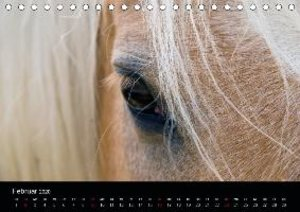 Wunderschöne Haflingerwelt (Tischkalender 2020 DIN A5 quer)