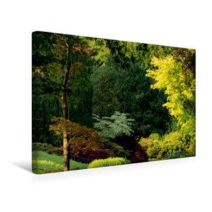 Premium Textil-Leinwand 45 cm x 30 cm quer Gemischte Baumvegetat