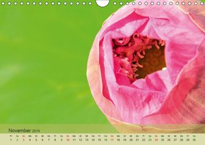 Emotionen in Grün (Wandkalender 2019 DIN A4 quer)